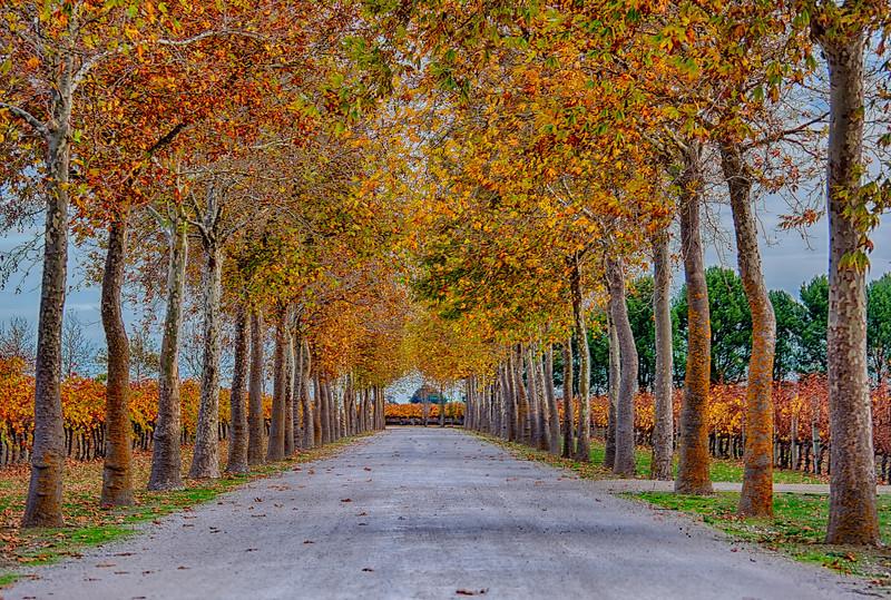 Laneway, Rymill Cellardoor, Coonawarra