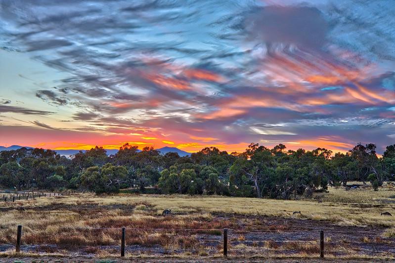 Kangaroo Sunrise