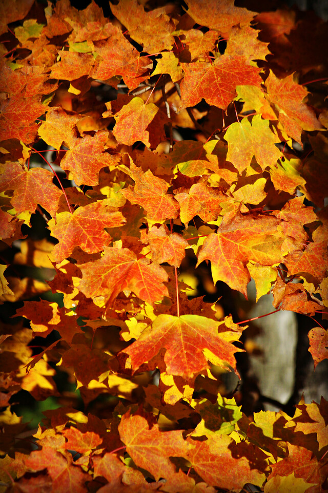 Octobers Orange
