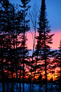 Sunset Behind The Evergreens