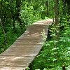 Woodland Boardwalk