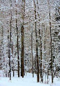 Winters Hush