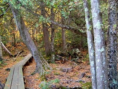 Woodland Path
