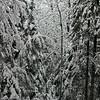 Winters Quiet Quilt