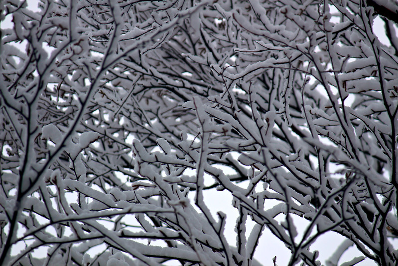 Winter Tangle