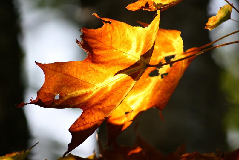 Autumns Last Light
