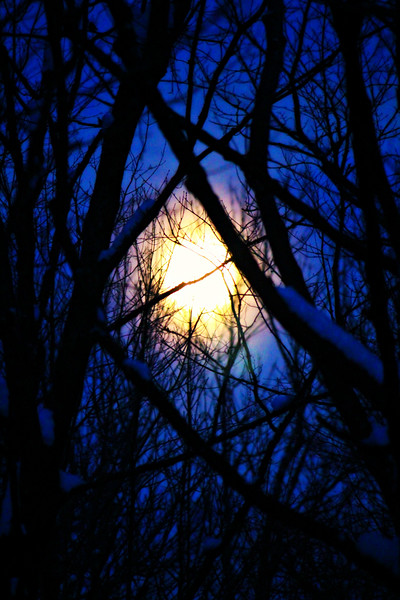 Cold Moon Forest