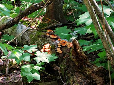 Mushroom Bounty