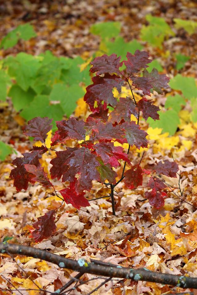 Crimson Fall