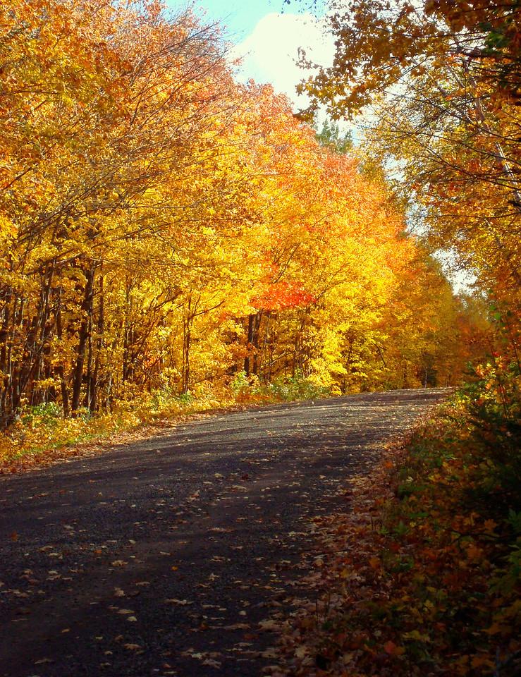 Autumn Amber