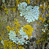 I Lichen  Like That