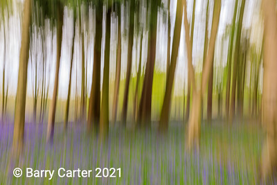 Trees, Space and Bluebells