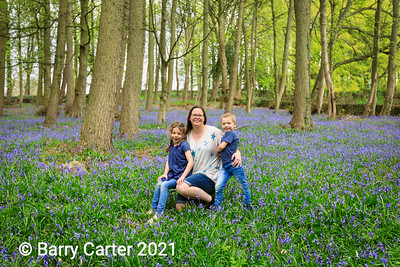 A Morning in the Bluebell Wood
