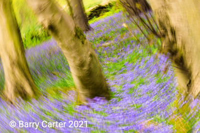 Bluebells in a Twist