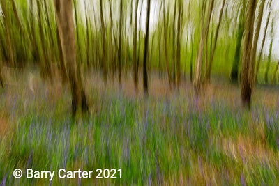 Wobbly Wood and Bluebells