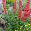 flower gardens everywhere
