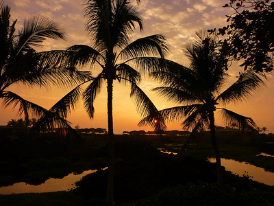 Hawaii Feb 2014