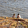 Sittin' and lookin' at The Kansas River, Lawrence, KS.