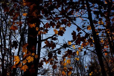 """""""Fall Deeper."""""""