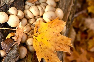 Cincinnati Nature Center, Milford, Ohio, October 2014.