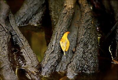 Secret Woods Nature Center, Dania, Fla., October 2015.