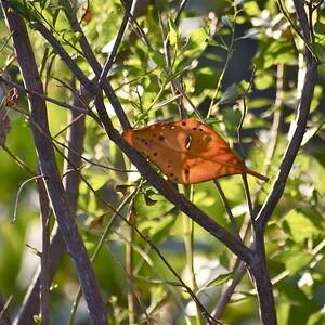 Anne Kolb Nature Center, Hollywood, Fla., November 2014.