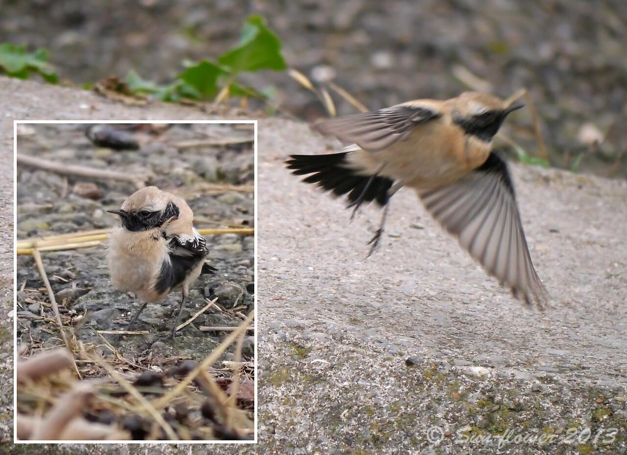 Ruffled Feathers & Flight