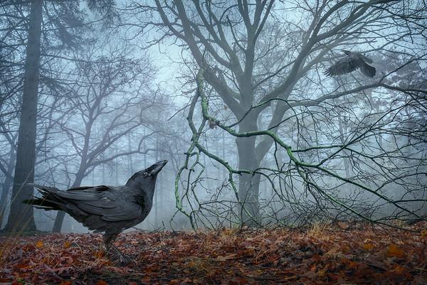 Birds   Vogels