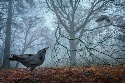 Birds | Vogels