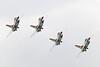 """USAF F-16 """"Thunderbirds"""" Image #5006"""
