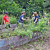 Parents, students and volunteers help clean out the garden bed area at the Pyne Arts School, the area was so overgrown you couldn't find the raised beds. SUN/David H. Brow