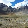 Поскольку власти определили Тибет как заповедник, то здесь можно встретить рядом с дорогой разных диких животных и птиц.