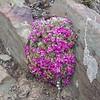 Цветы на озере Ямдрок Цо.