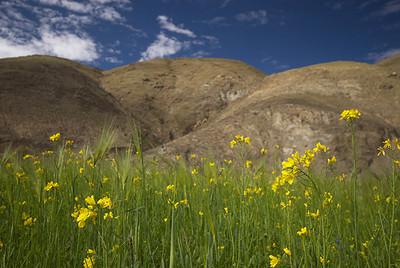 23 экспедиция на Кайлаш. Июль 2006 г.