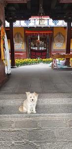 Монастырь Самье. Напротив главного молитвенного зала море цветов и милая собаченция! 6 сентября.