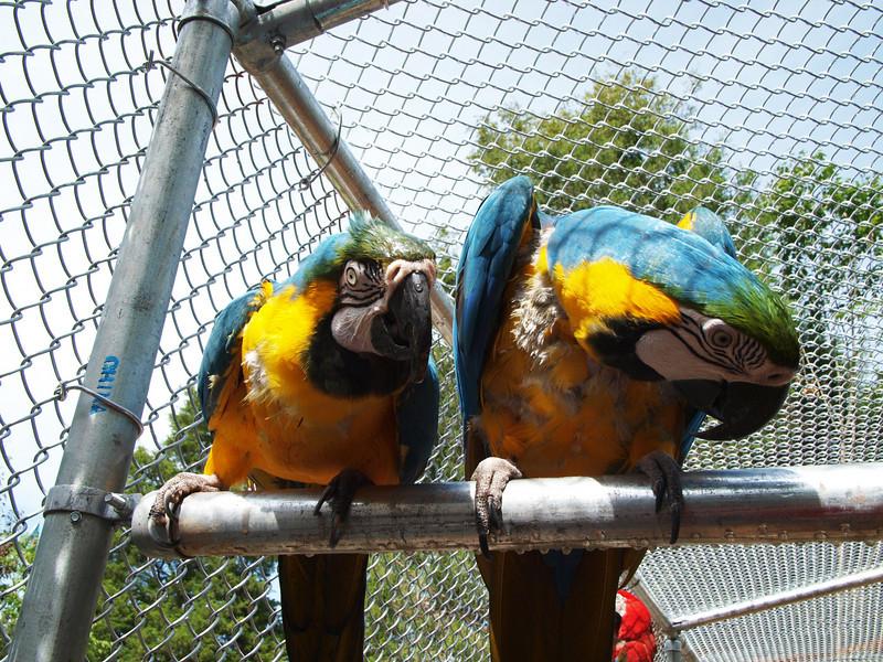 Garuda Aviary Rescued Birds - 4