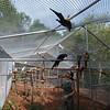 Garuda Aviary Flight Cage - 2