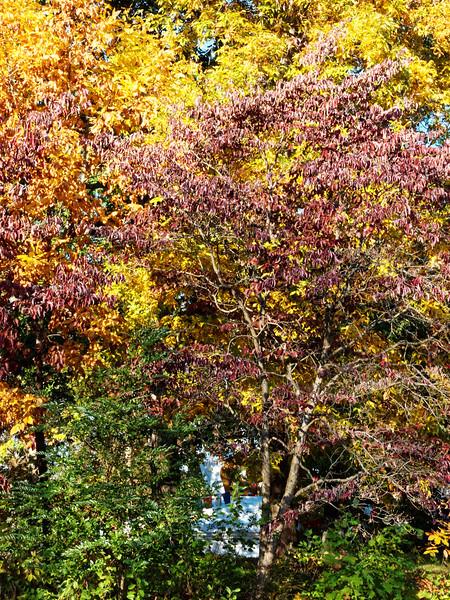 TK-299_179480_Enlightenment Stupa Autumn