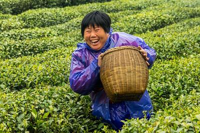 Laughter - Longjing Village - Dragon Well Tea Plantation