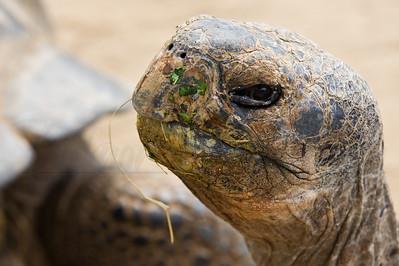 Dirty Tortoise