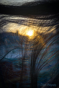Hair Web