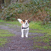Jack Russell Terrier Clifford DSCN0134