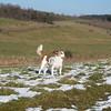 Jack Russell Terrier Clifford DSC09903