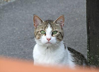 Katzen in Würzburg