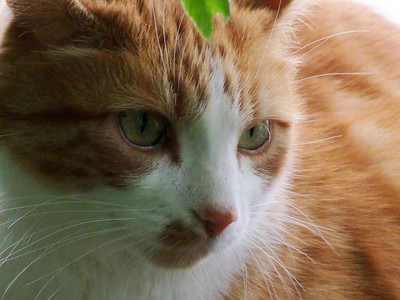 Nachbars Katze