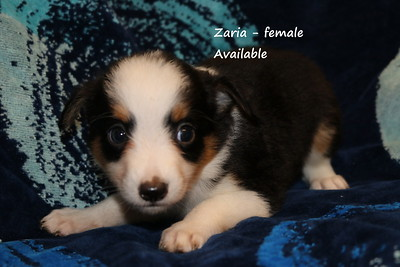 Zaria has been reserved as of 7/25/21