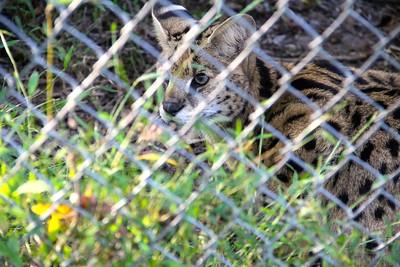 Tiger Preserve