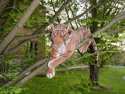 Tony MacTigerton Takes to the Trees
