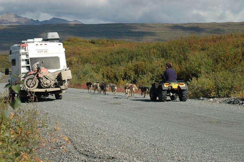 Summer camp for the sled dogs, Denali Highway, Alaska