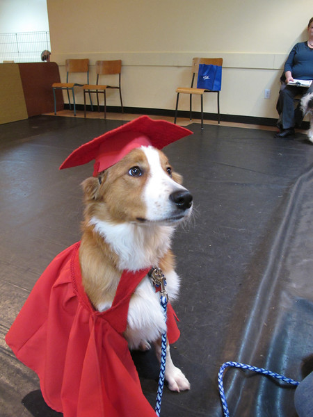 Graduation from puppy school.